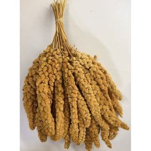 CHINESE YELLOW MILLET SPRAYS - WHITE 900g (Approx 30 SPRAYS)