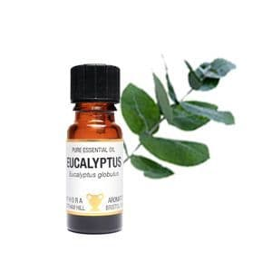 Eucalyptus Essential oil 10ml - Amphora Aromatics
