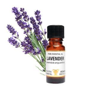 Lavender Essential Oil 10ml - Amphora Aromatics