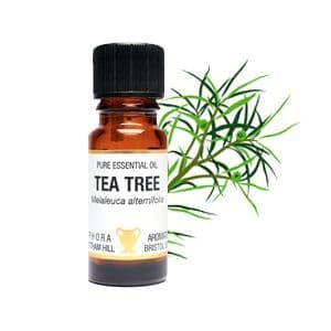 Tea Tree Essential Oil 10ml - Amphora Aromatics