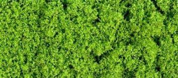 GM150 30g Fine Light Green Foliage