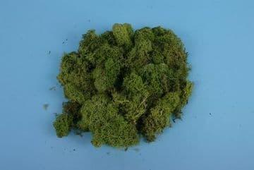GM164 Light Green Lichen