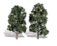 Lichens & Trees
