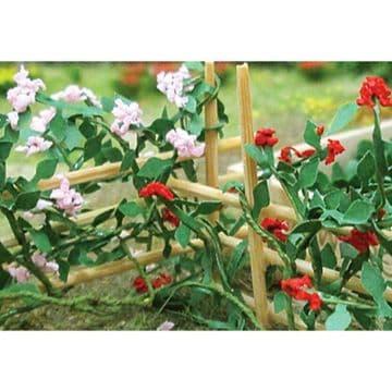 TS00678 Climbing Roses (6 per pack)