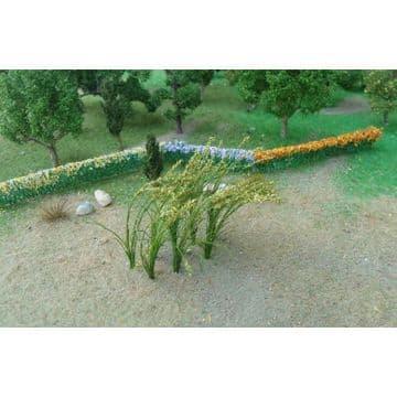 TS01010 Green Wheat