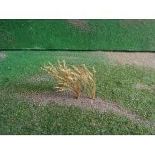 TS01011 Brown Wheat