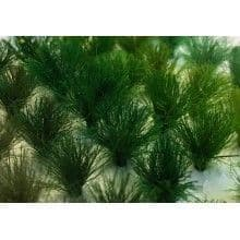 TS01022 10mm Assorted Green Tufts (30 per pack)