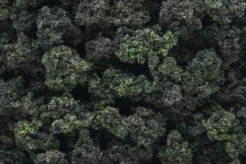 WFC149 Forest Blend Bushes