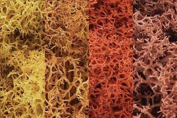 WL165 Autumn Mix Lichen