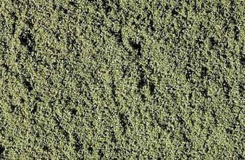 WT46 Weeds Fine Turf