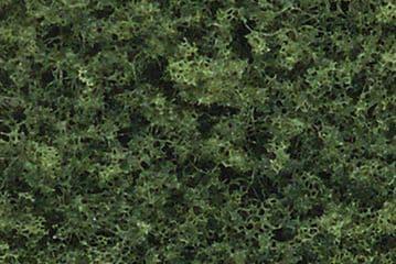 WTR1111 .75-3in.Med Grn Decid Tree